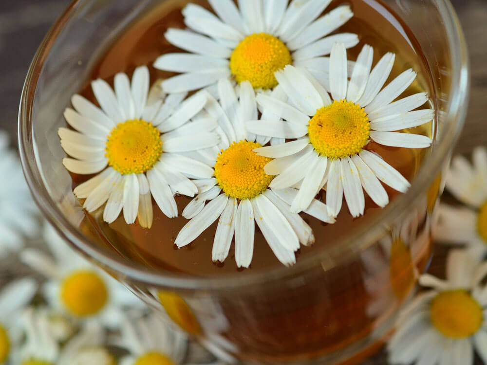 a chamomile tea helps to relieve stress for cats