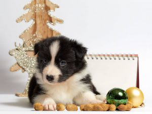 10 DIY Christmas Present Ideas for Your Dog