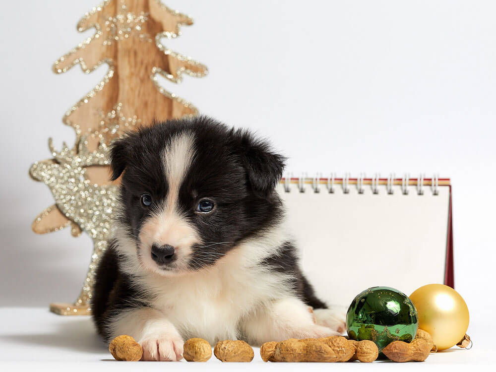 A puppy sitting near a food and Christmas balls