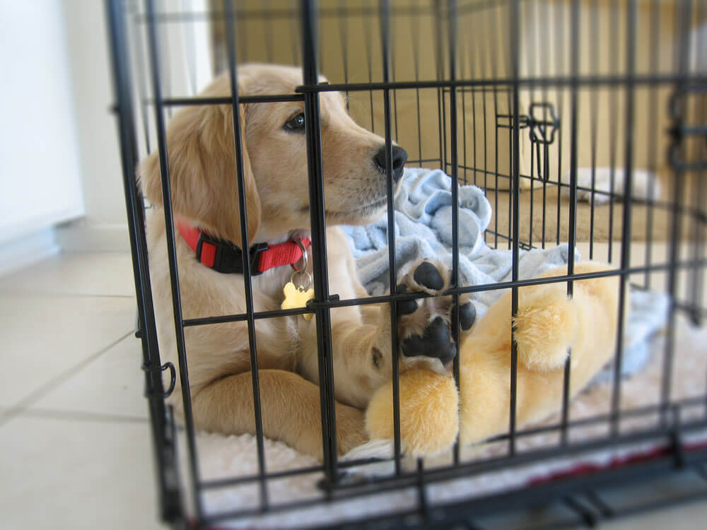 a puppy trained to stay in its crate