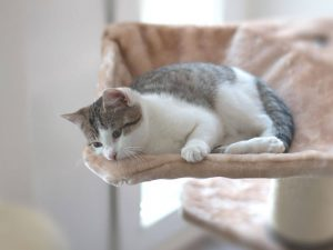 Is My Cat Depressed?- Natural Remedies and Solutions for Cat Depression