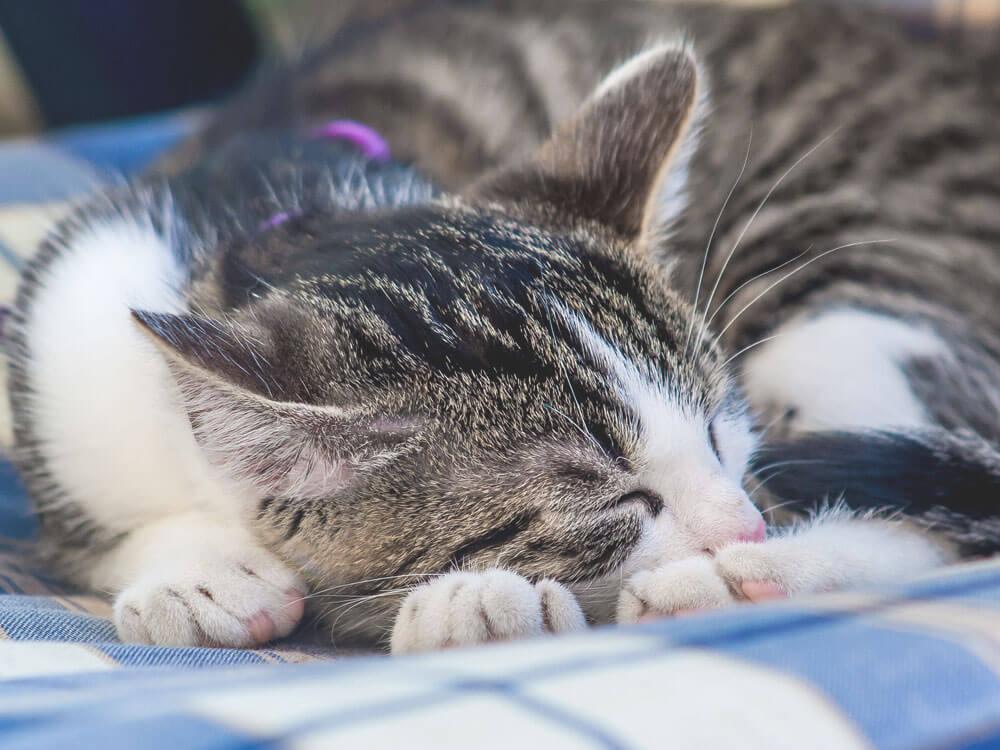 a depressed cat sleeping