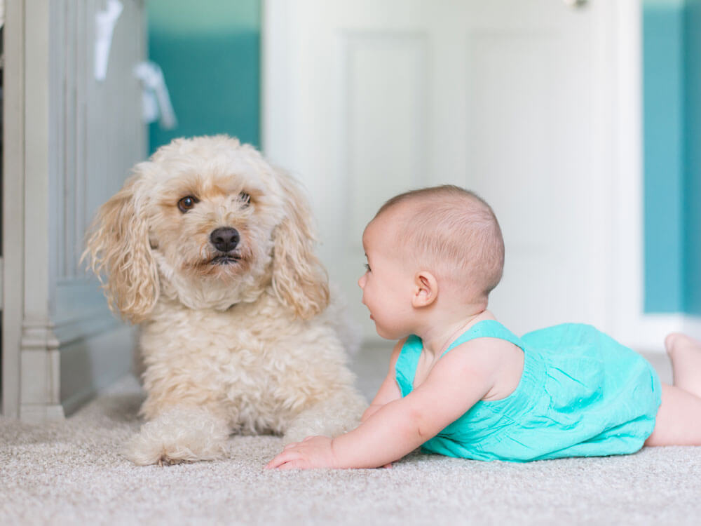 a smart dog with an adorable toddler lying on the floor