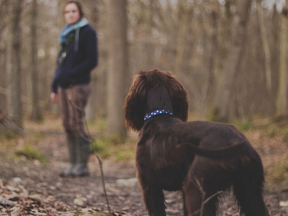 """a woman trains her dog of a """"come"""" command"""