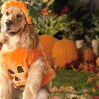 19 Best Dog Halloween Costume Ideas