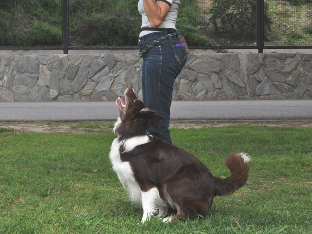 a woman trains its dog in a heeling position
