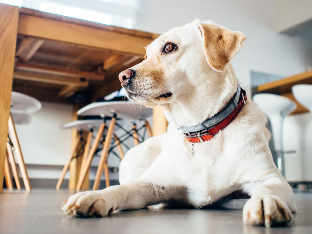 a dog trained to sit behavely