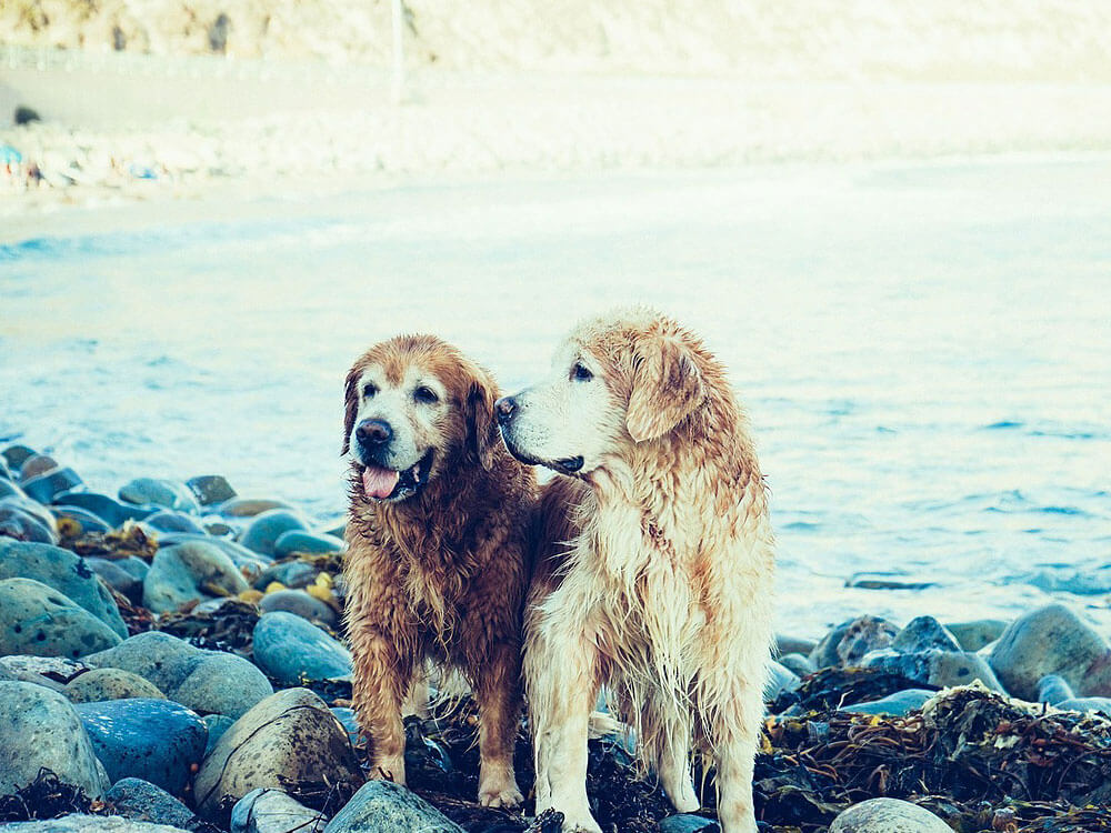 two dogs lovely dogs at the beach