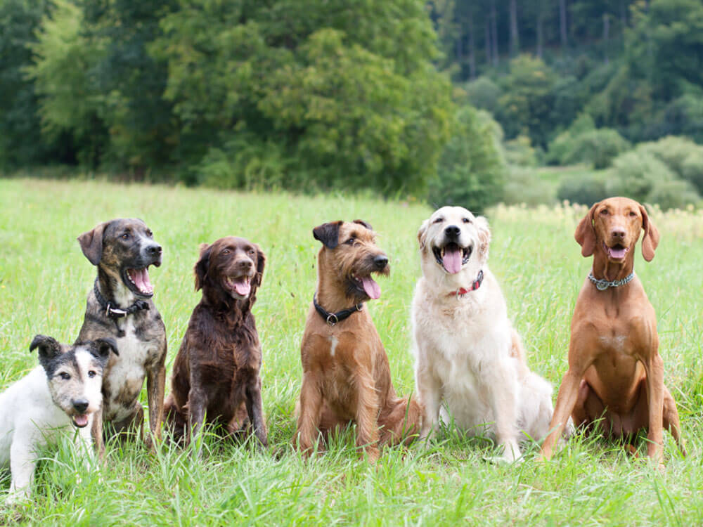 dogs attending a training boot camp