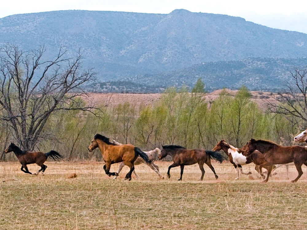 a group of horses running in the field