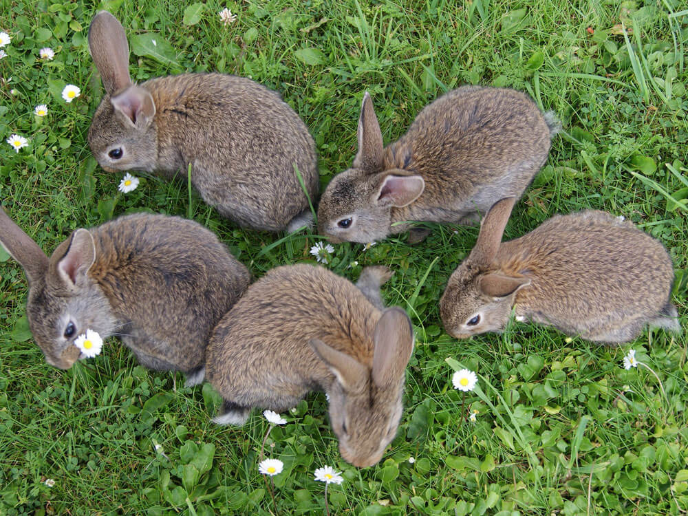 a group of rabbits in a grass