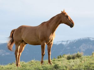 Everything You Need to Know Before Buying a Horse