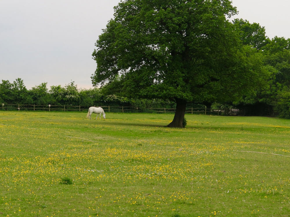 a paddock with a large space for horses to run around