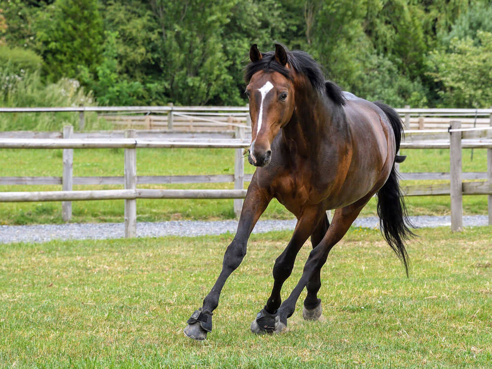 a horse running in a wide area