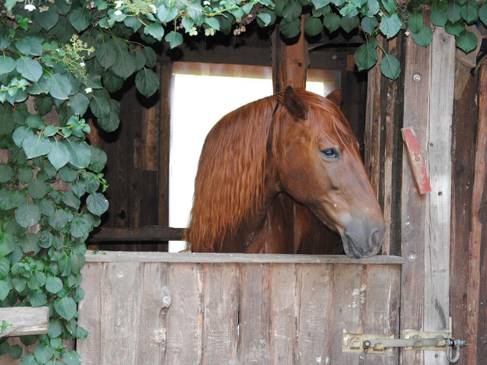 a horse staying in its shelter