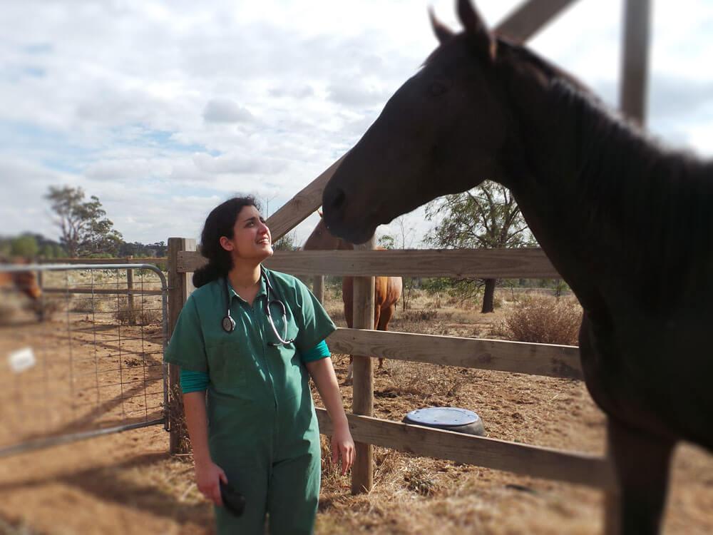 a vet checks the horse health condition
