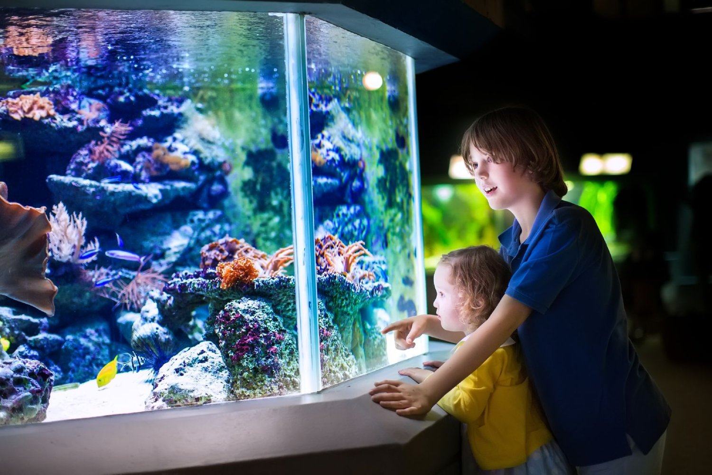 two kids watching their pet fish in the aquarium