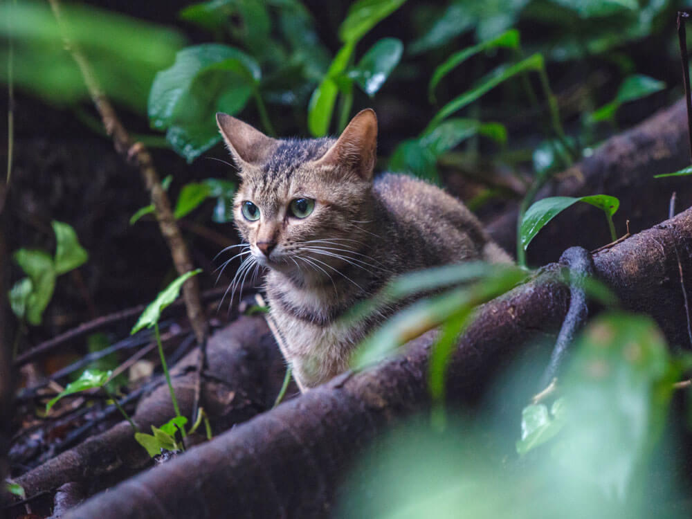 a lost cat strolling in the woods