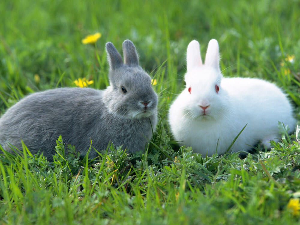 two rabbits in a grass field