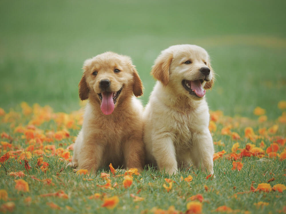Two beautiful dog breed sitting in the grass field