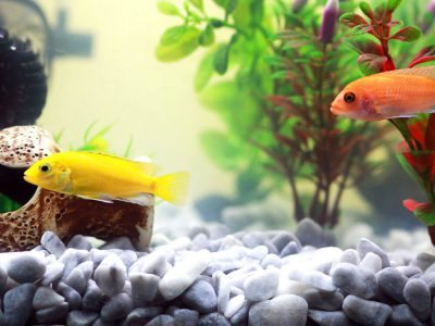 How to Keep Your Pet Fish Happy and Healthy?