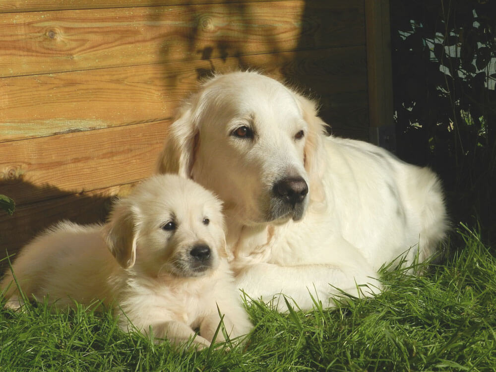 an adopted puppy and an adult dog sitting in the grass