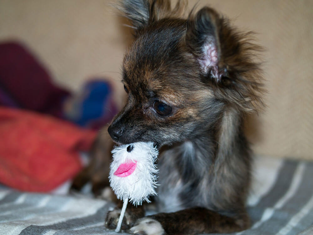 a puppy playing a toy