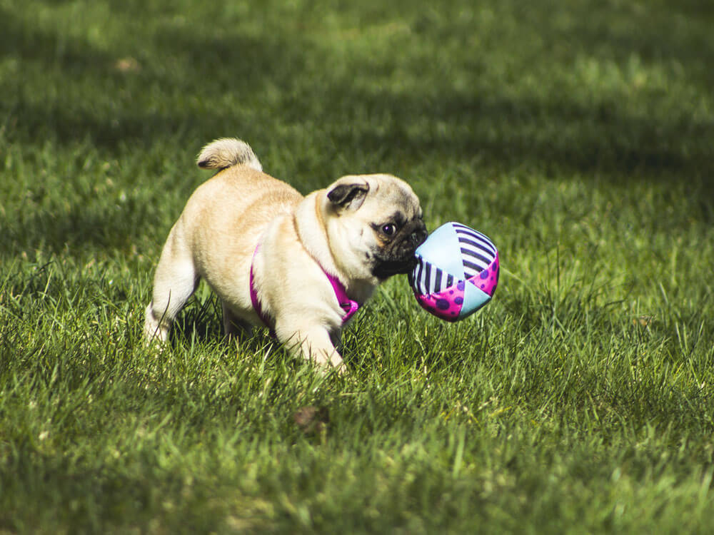 a puppy playing a toy ball