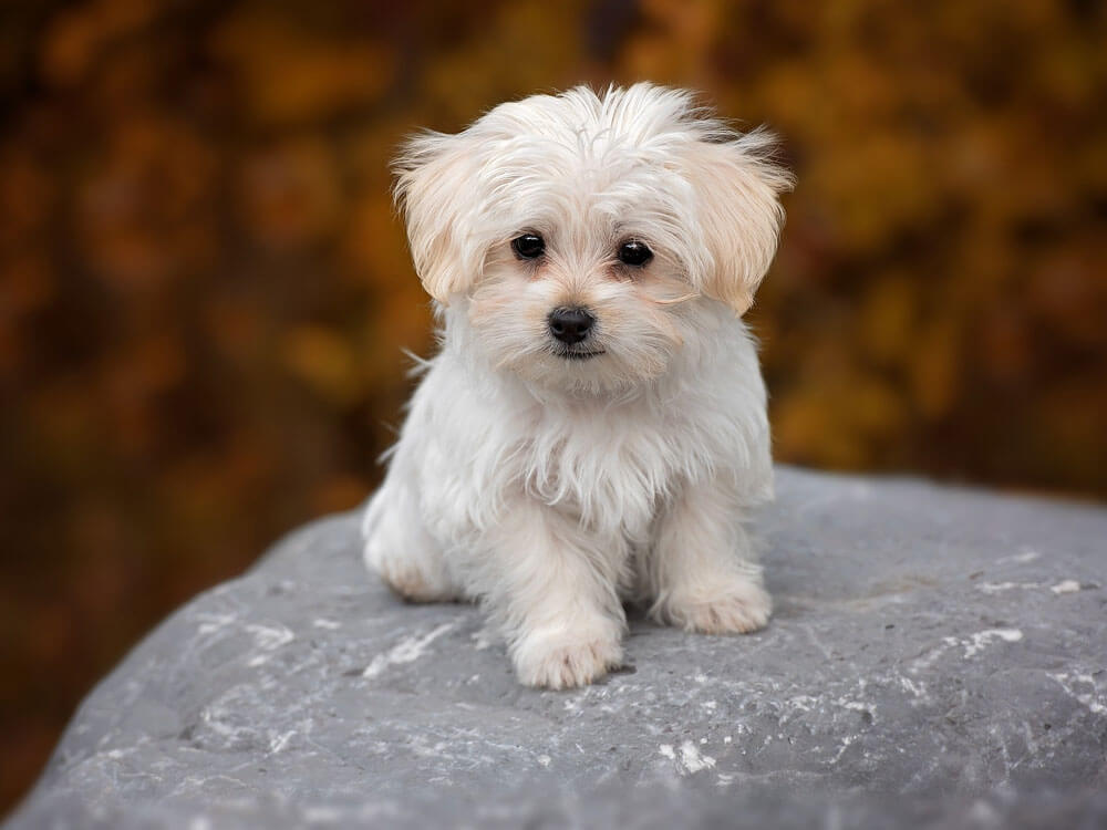 an adorable puppy staring