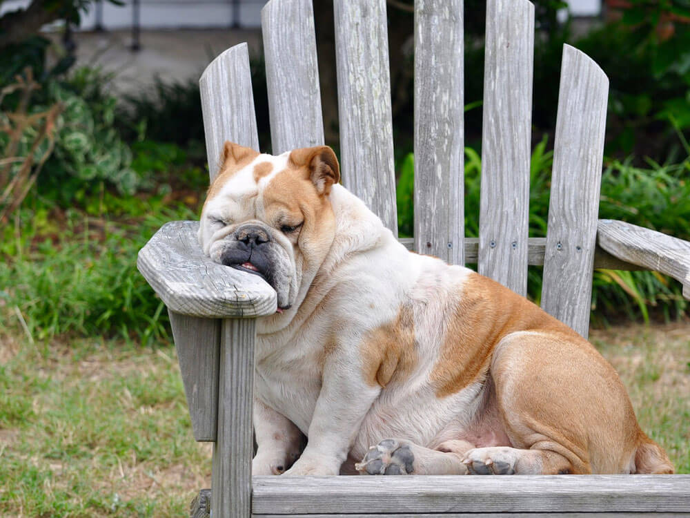 a stressed dog sleeping on the chair