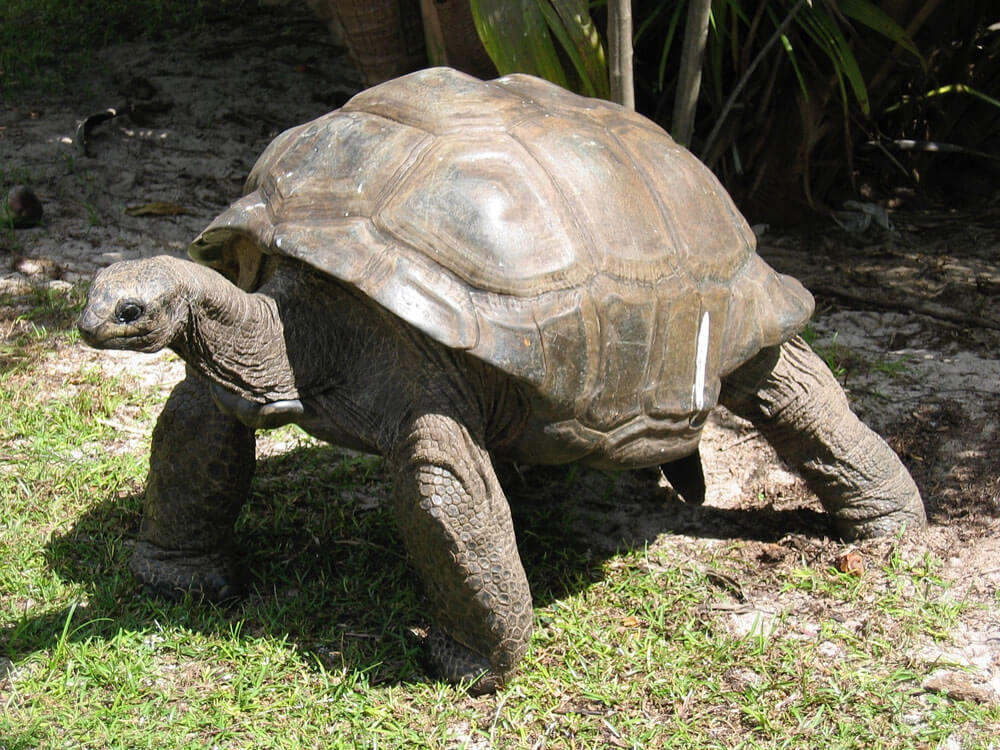 a tortoise basking in the grass field