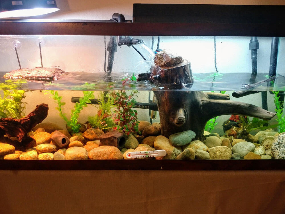 a clean tank for turtles