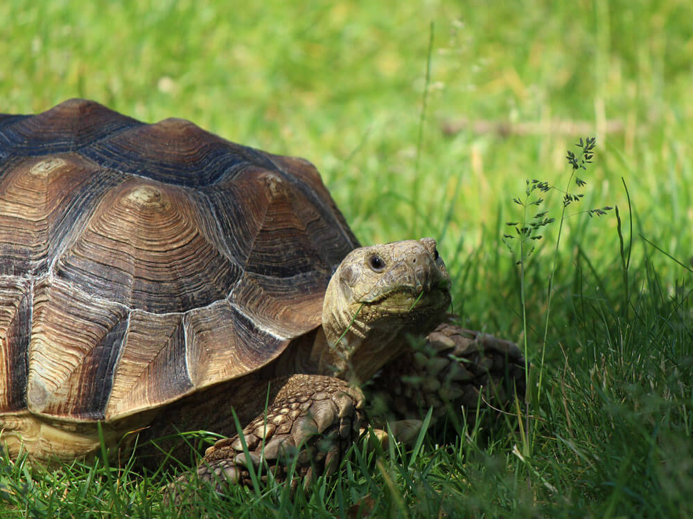 a turtle under the heat of the sun