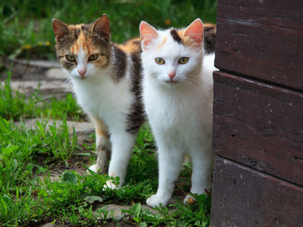 two cats with spraying symptoms