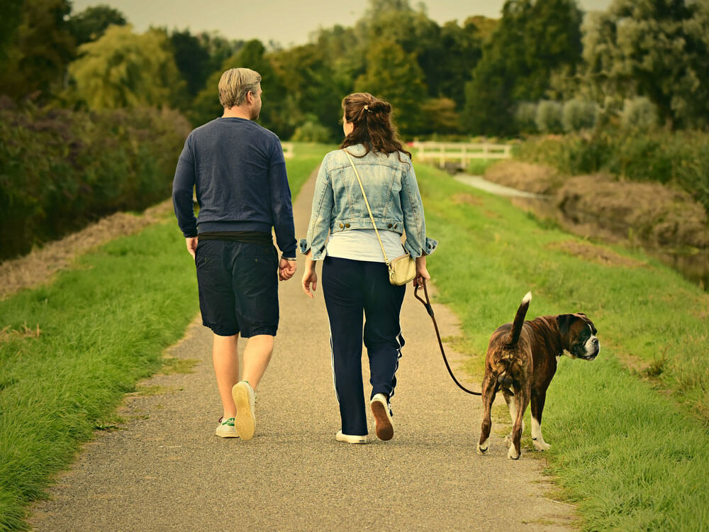 a dog behaviorist interacts well with the dog owner