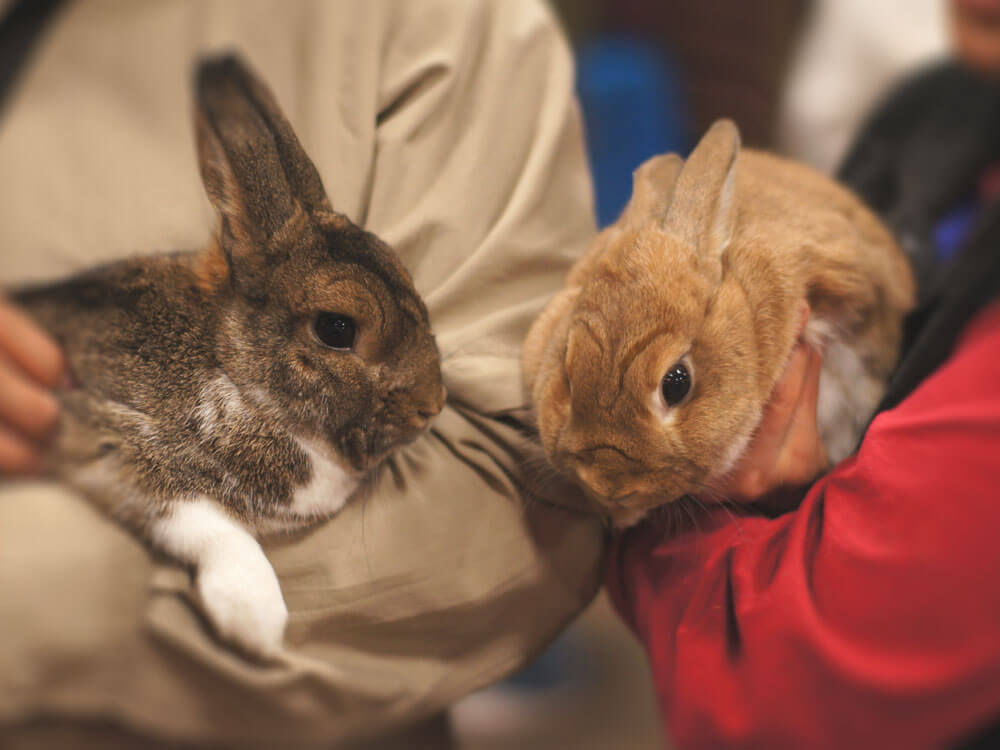 two pet rabbits carried by each owner