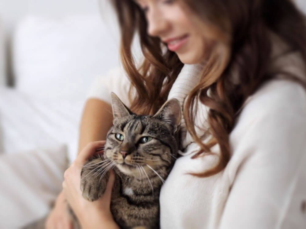 a cat hugged by its owner