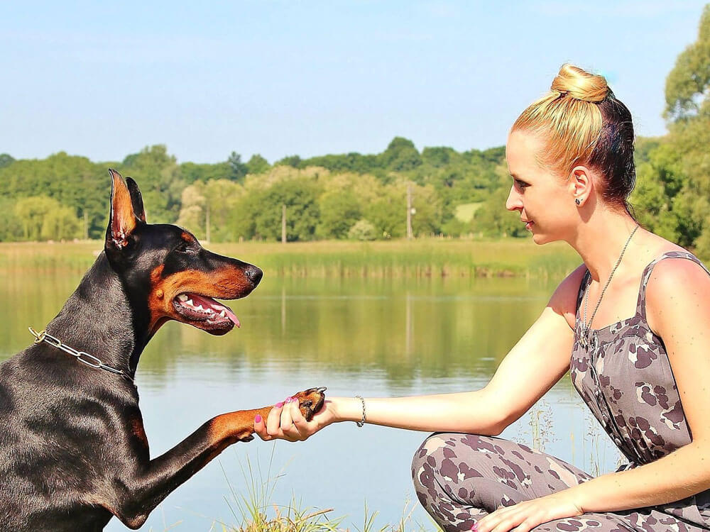a compatible relationship between a dog and a dog behaviorist