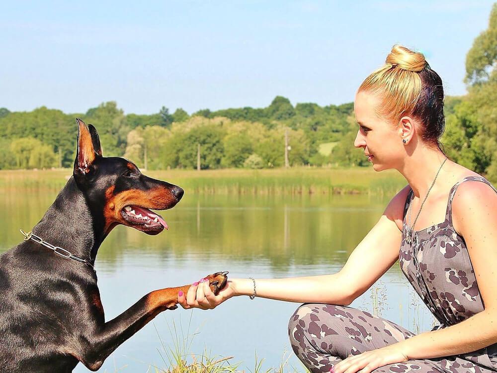 a compatible relationship between a dog and a dog behaviorist