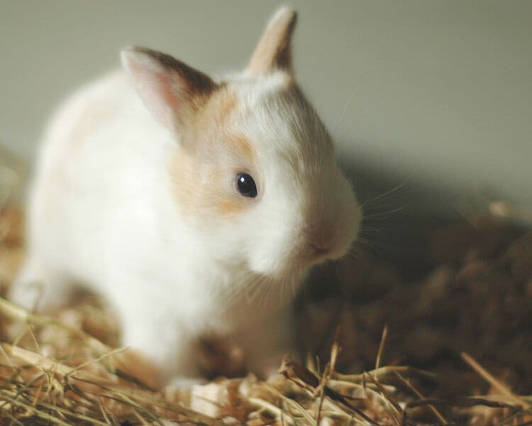 a baby bunny in a litter tray full with hay