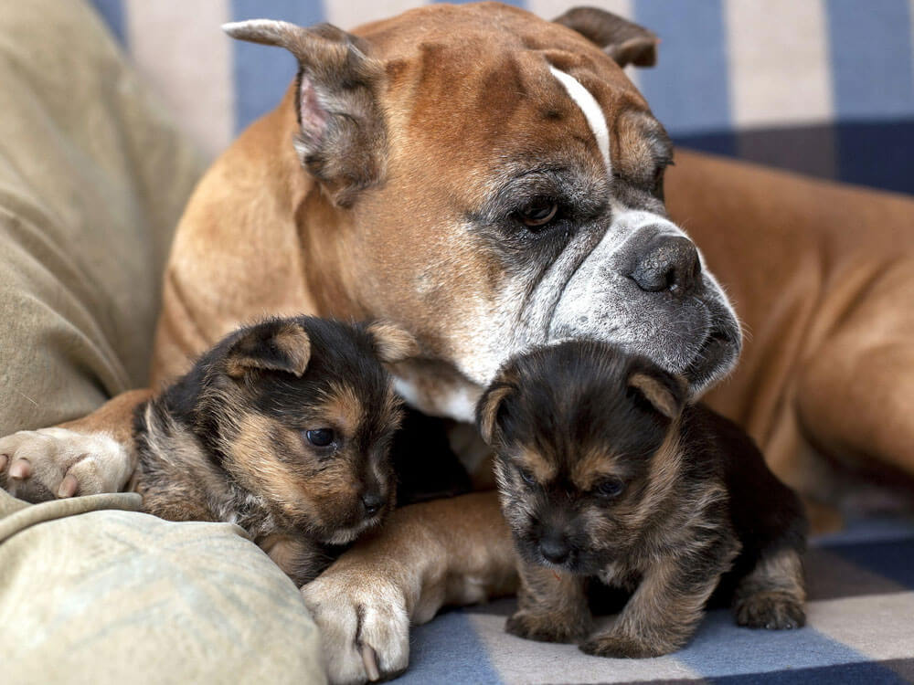 two weeks old puppies with their mother dog