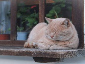 Kidney Disease in Cats: Causes and Treatments