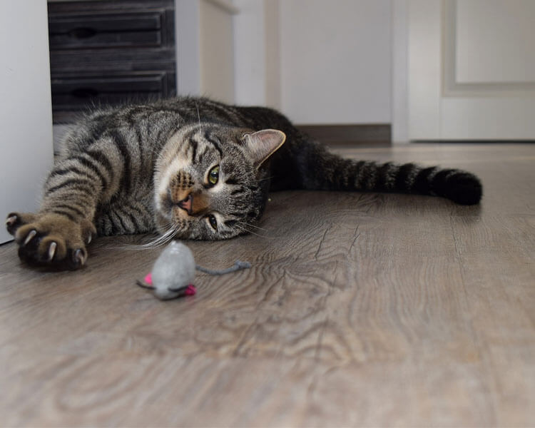 sick cat lying down on the floor near its toy