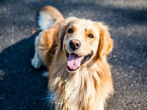 Dog Allergies: Symptoms and Treatments