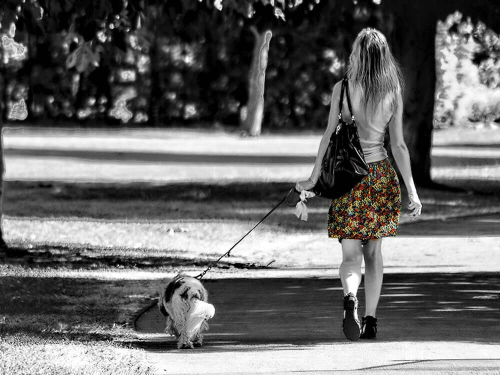a dog and its owner walking at the park