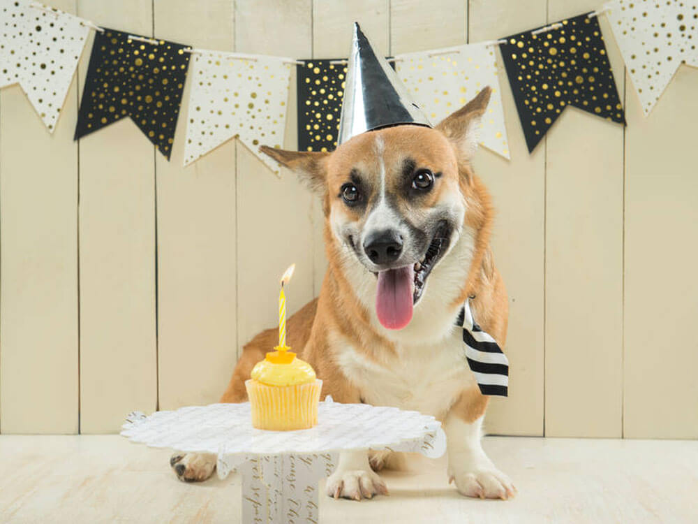 Cool Homemade Dog Birthday Cake Uk Pets Personalised Birthday Cards Veneteletsinfo
