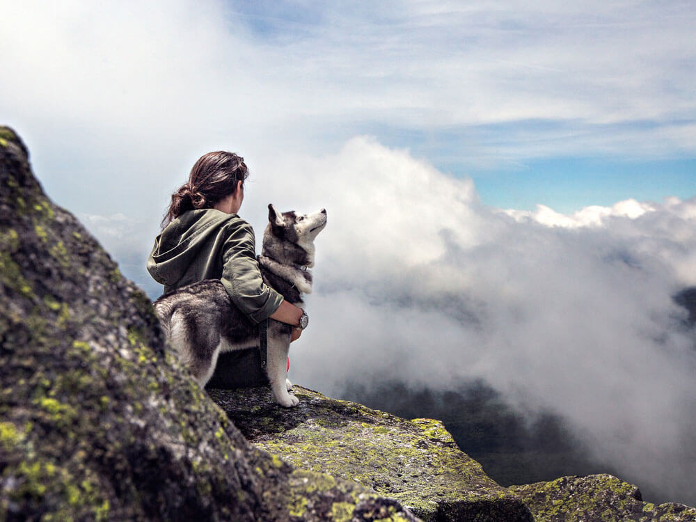 the ultimate guide when hiking or camping with dogs