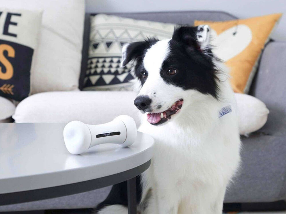 essential tools and gadgets for dog training