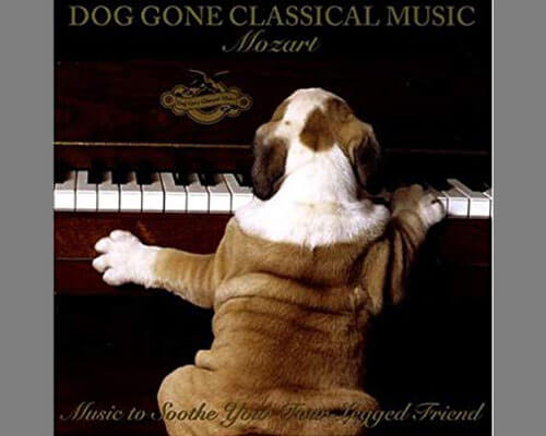 "a photo album of ""Dog Gone Classical Music: Mozart"", (April 2006)"