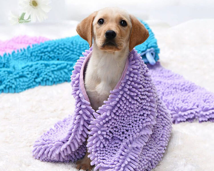 dog wrap in a clean towel after taking a bath